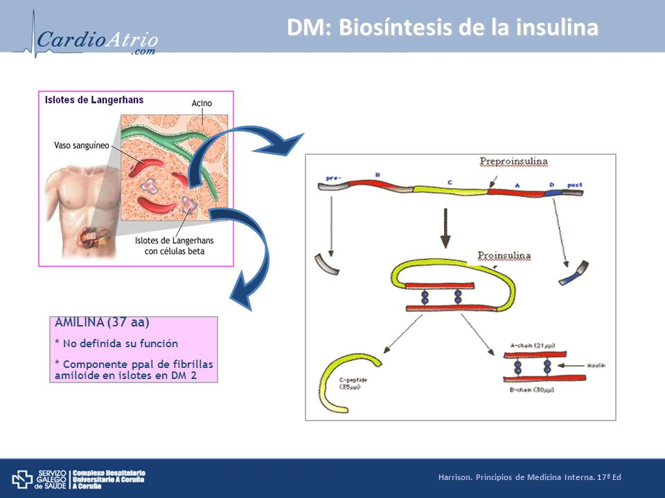 DM: Biosíntesis de la insulina