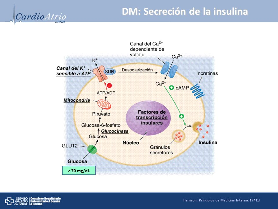 DM: Secreción de la insulina