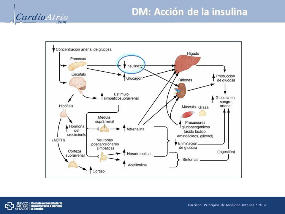 DM: Acción de la insulina