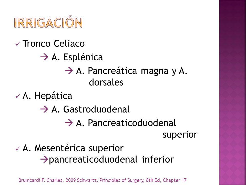 IRRIGACIóN Tronco Celiaco  A. Esplénica