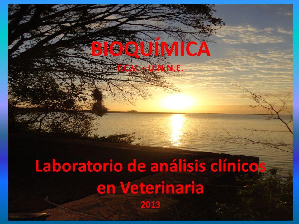 Laboratorio de análisis clínicos en Veterinaria