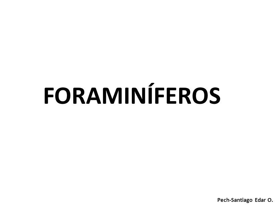 FORAMINÍFEROS Pech-Santiago Edar O.