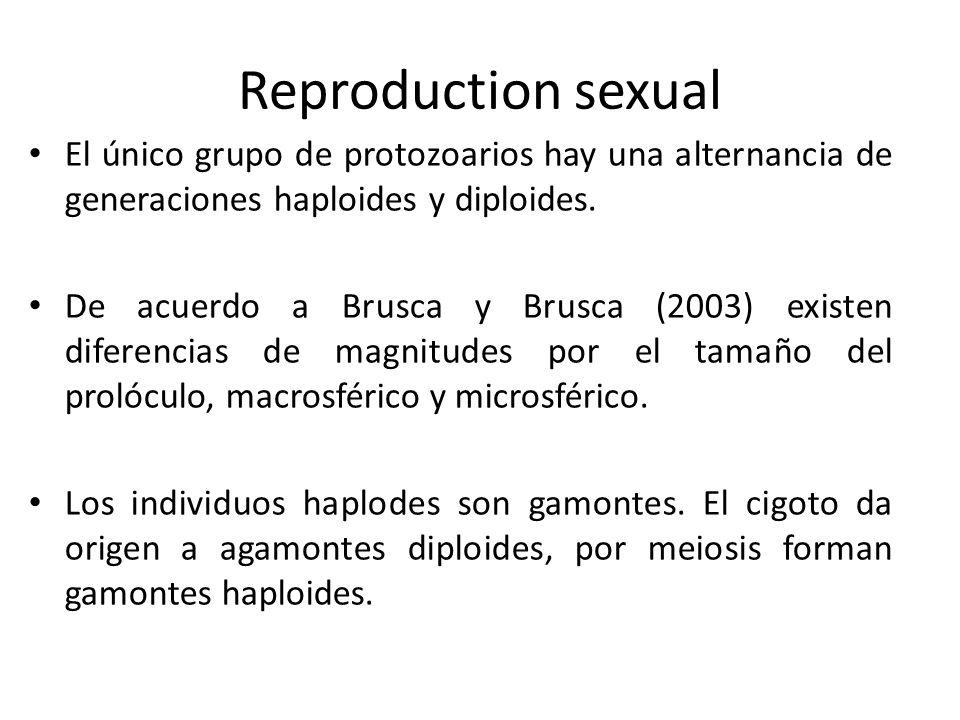 Reproduction sexual El único grupo de protozoarios hay una alternancia de generaciones haploides y diploides.
