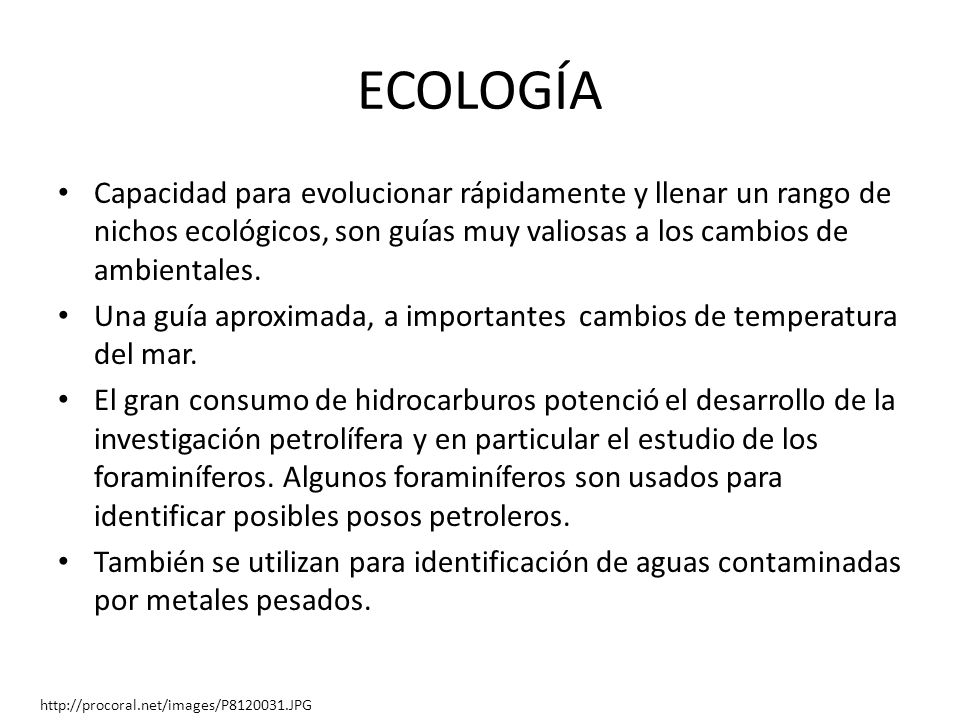 ECOLOGÍA Capacidad para evolucionar rápidamente y llenar un rango de nichos ecológicos, son guías muy valiosas a los cambios de ambientales.