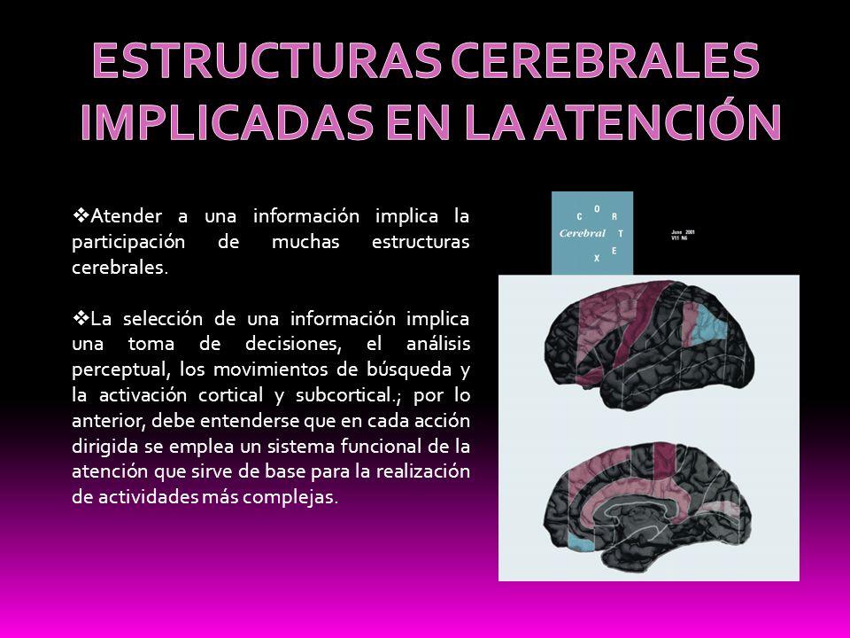 ESTRUCTURAS CEREBRALES IMPLICADAS EN LA ATENCIÓN