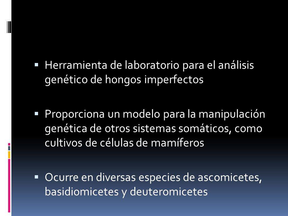 Herramienta de laboratorio para el análisis genético de hongos imperfectos
