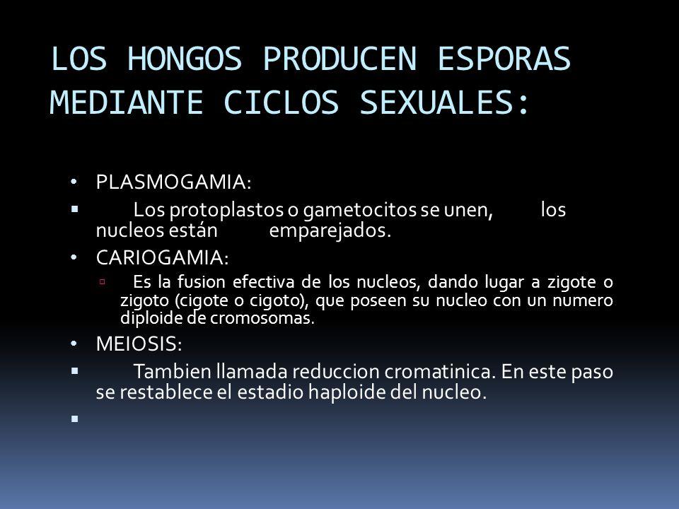 LOS HONGOS PRODUCEN ESPORAS MEDIANTE CICLOS SEXUALES: