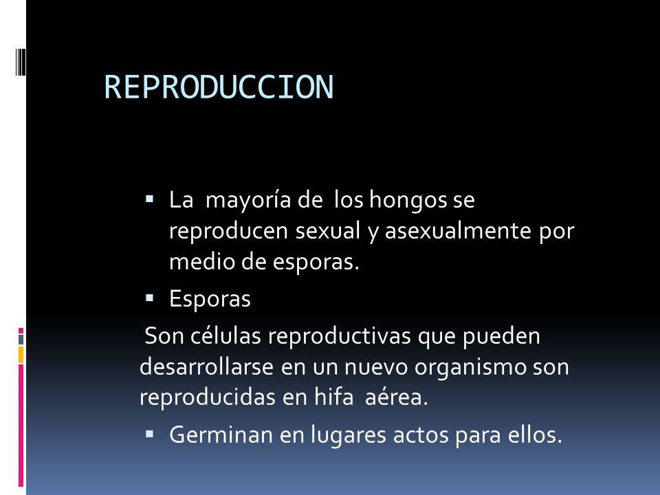 REPRODUCCION La mayoría de los hongos se reproducen sexual y asexualmente por medio de esporas.