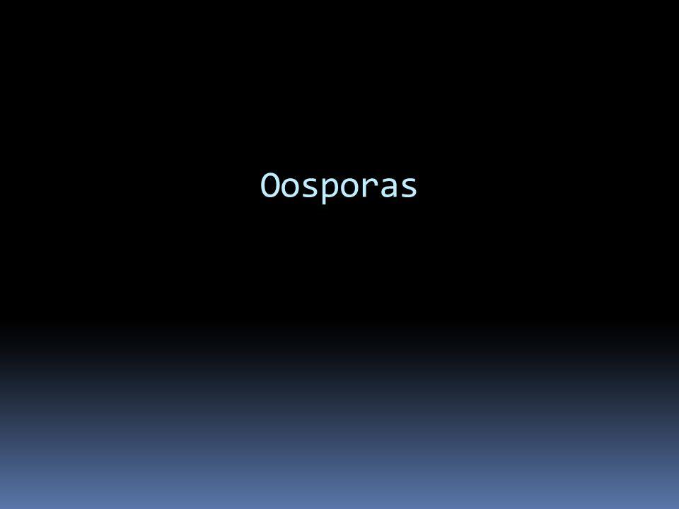 Oosporas