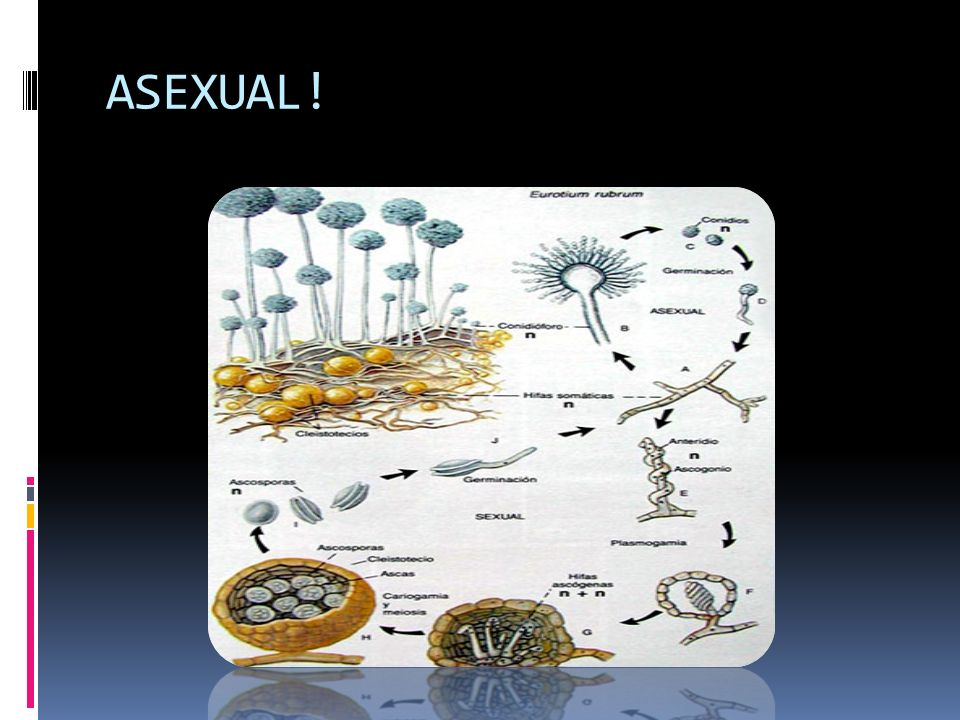 ASEXUAL!