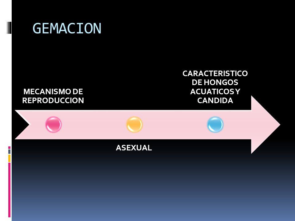 MECANISMO DE REPRODUCCION CARACTERISTICO DE HONGOS ACUATICOS Y CANDIDA