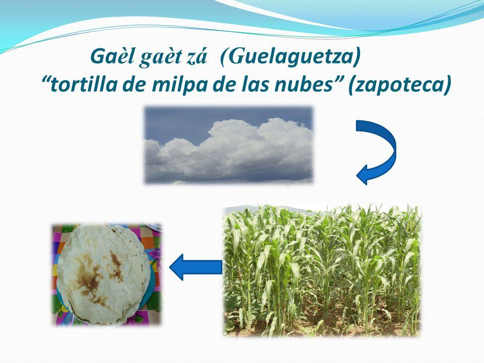 Gaèl gaèt zá (Guelaguetza) tortilla de milpa de las nubes (zapoteca)