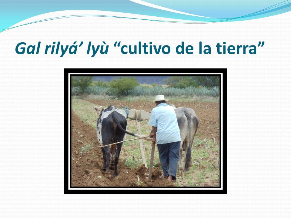 Gal rilyá' lyù cultivo de la tierra