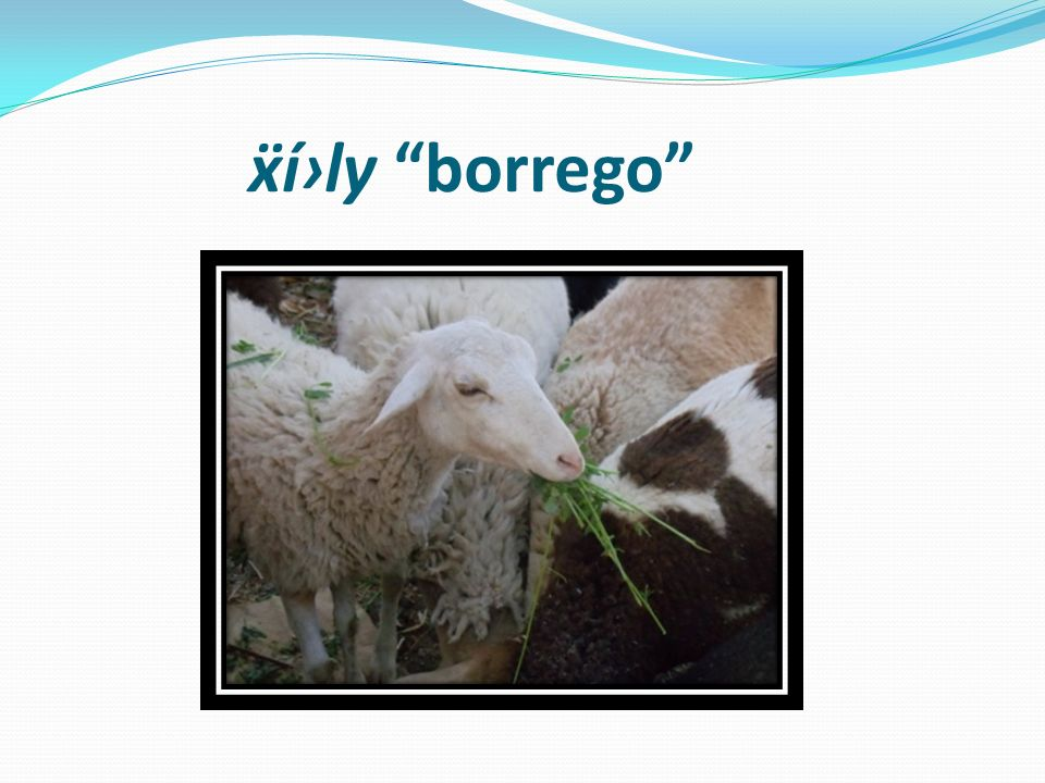 ẍí›ly borrego