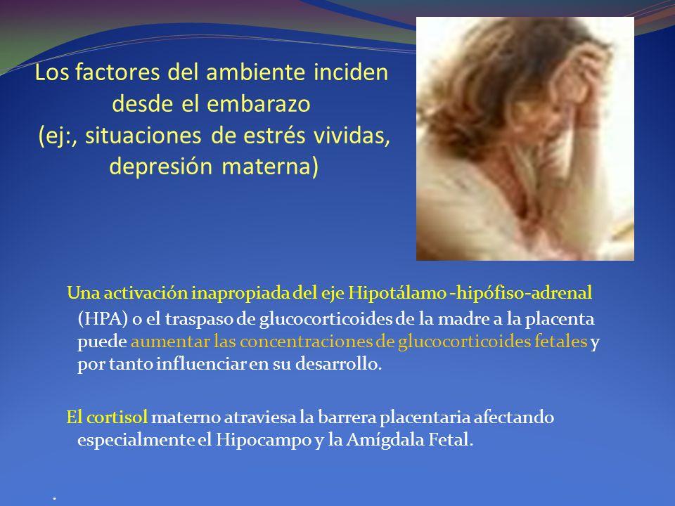 Los factores del ambiente inciden desde el embarazo (ej:, situaciones de estrés vividas, depresión materna)