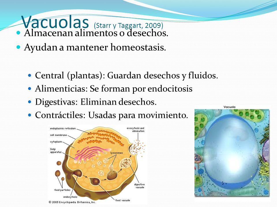 Vacuolas (Starr y Taggart, 2009)