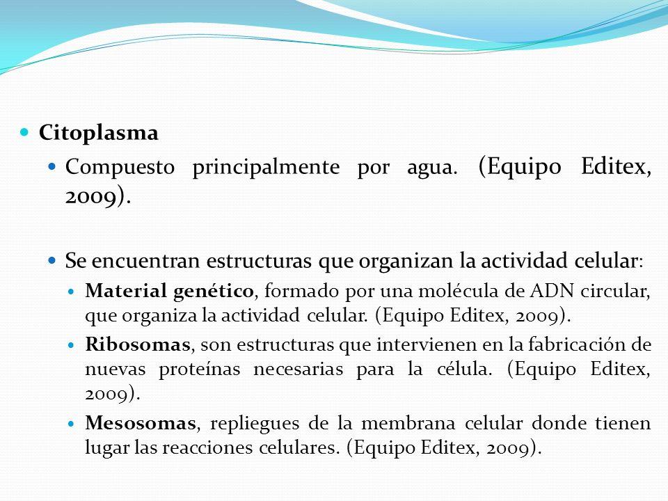 Compuesto principalmente por agua. (Equipo Editex, 2009).