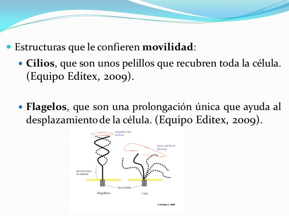 Estructuras que le confieren movilidad: