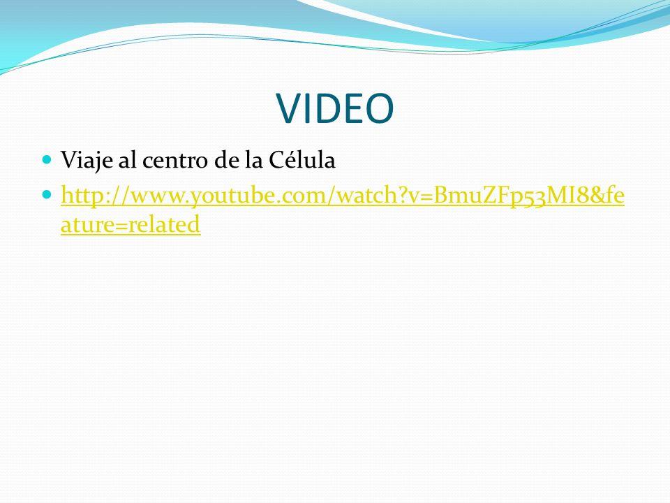 VIDEO Viaje al centro de la Célula