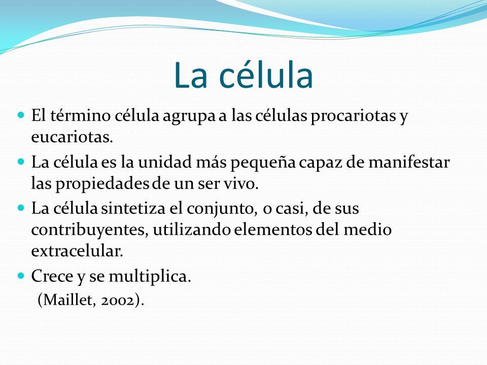 La célula El término célula agrupa a las células procariotas y eucariotas.