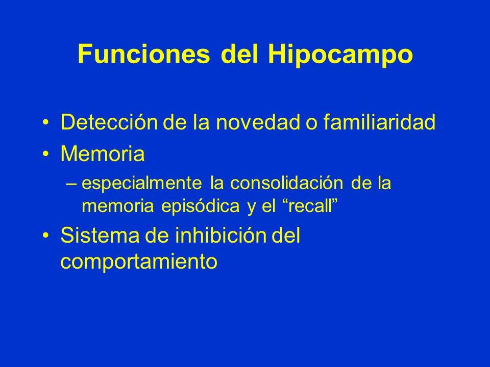 Funciones del Hipocampo