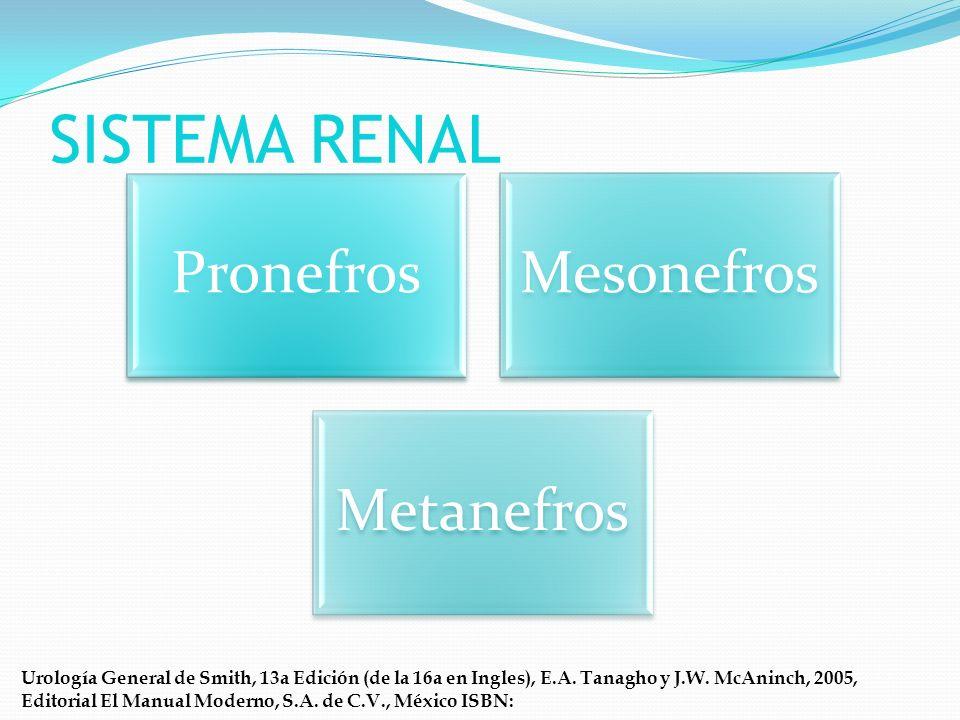SISTEMA RENAL Pronefros Mesonefros Metanefros
