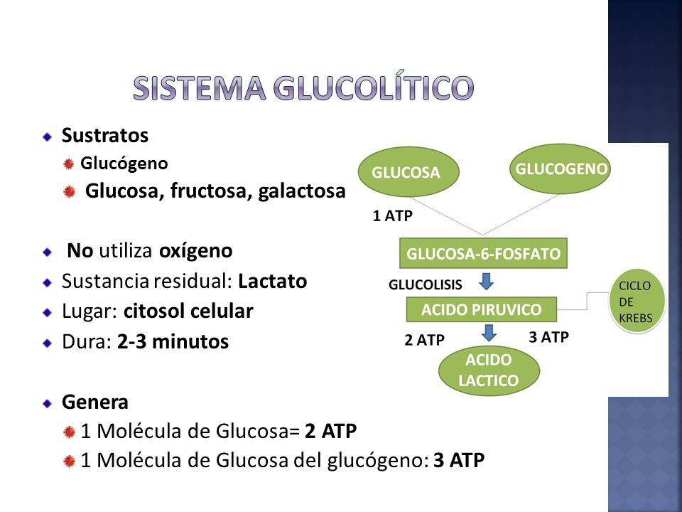 Sistema Glucolítico Sustratos Glucosa, fructosa, galactosa