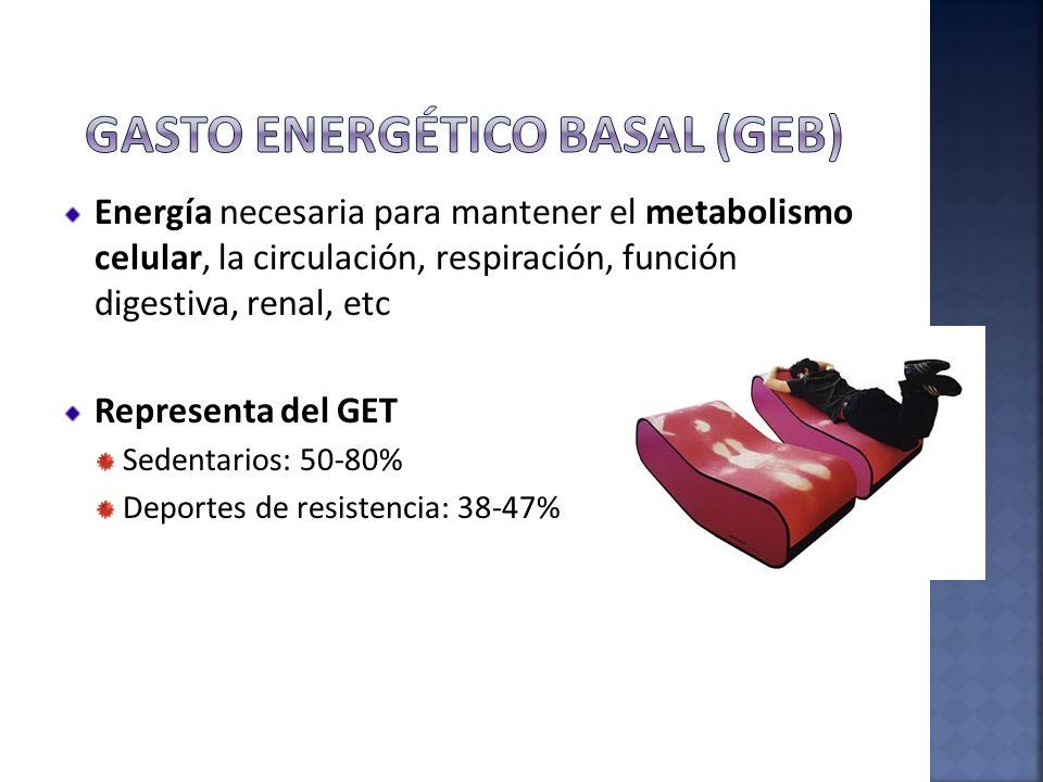 Gasto energético basal (GEB)