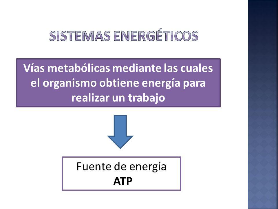 Sistemas energéticos Vías metabólicas mediante las cuales el organismo obtiene energía para realizar un trabajo.