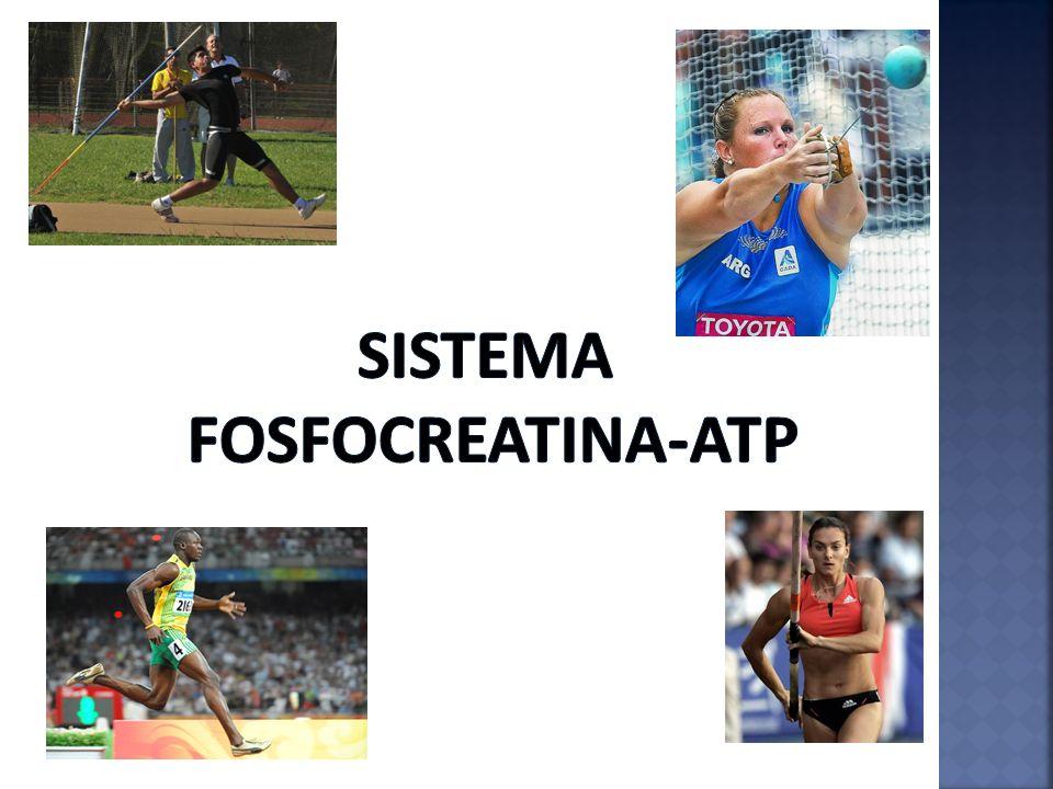Sistema Fosfocreatina-Atp