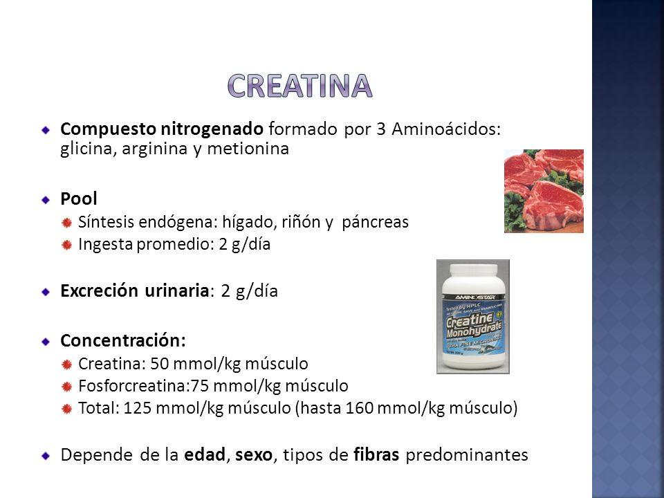 Creatina Compuesto nitrogenado formado por 3 Aminoácidos: glicina, arginina y metionina. Pool. Síntesis endógena: hígado, riñón y páncreas.