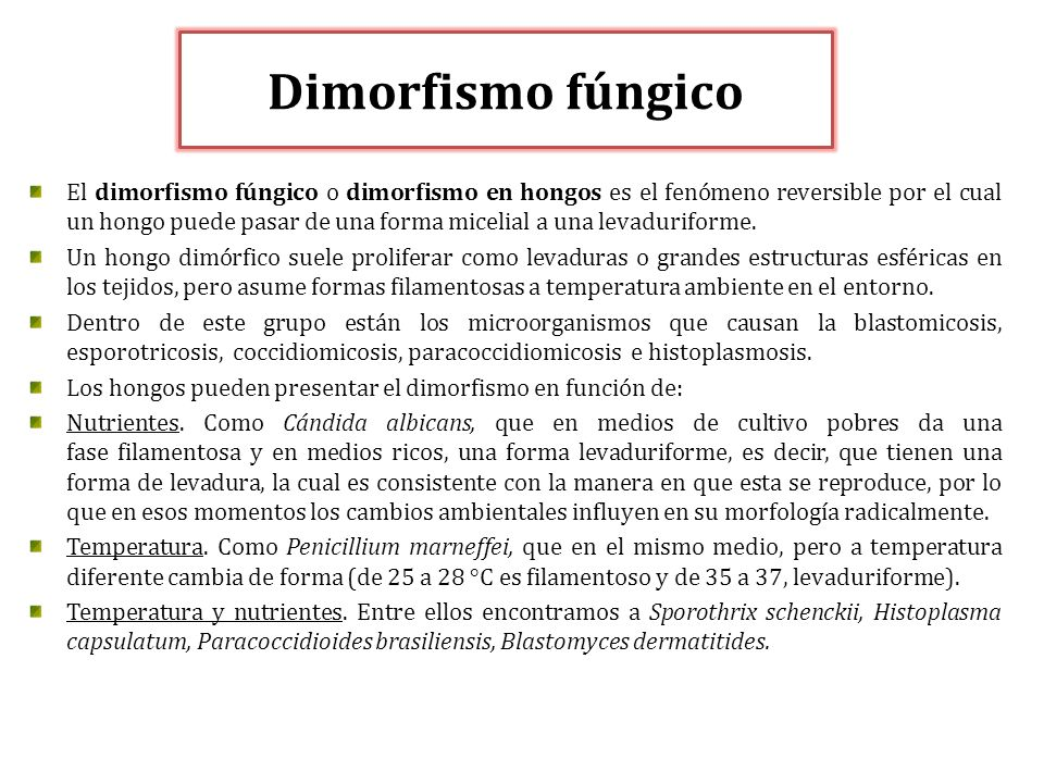 Dimorfismo fúngico