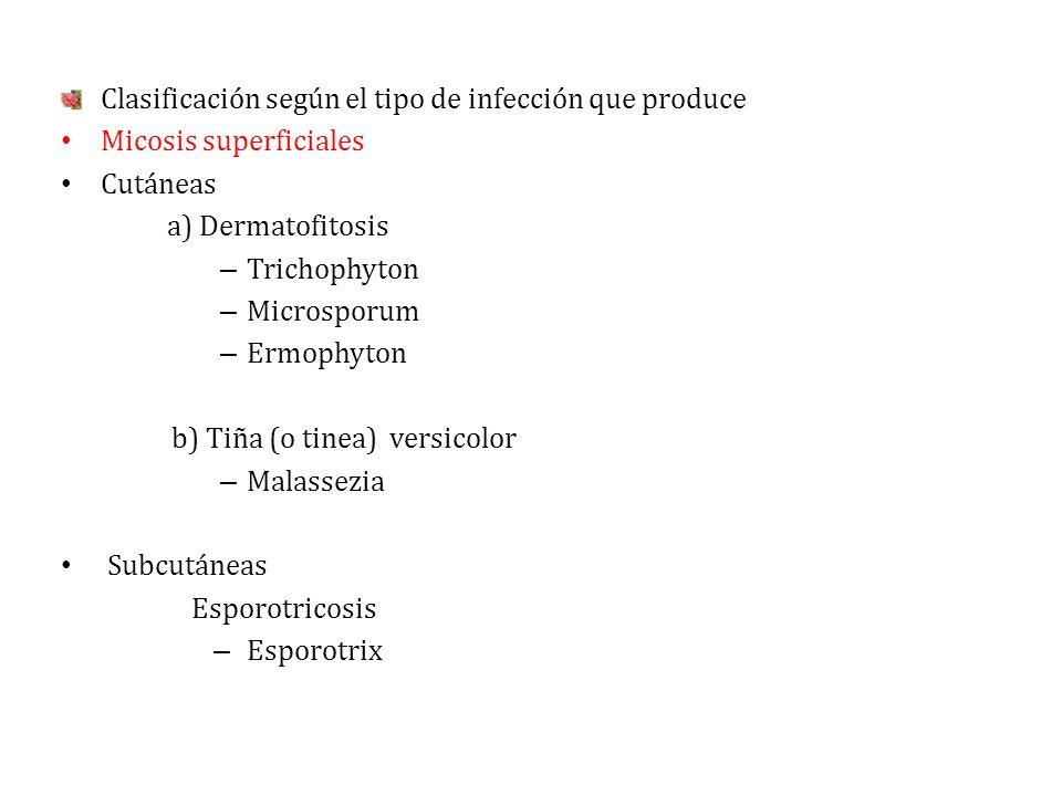 Clasificación según el tipo de infección que produce