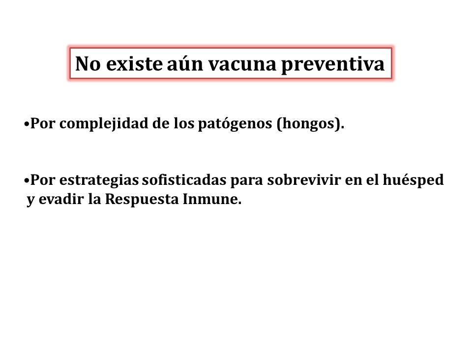 No existe aún vacuna preventiva