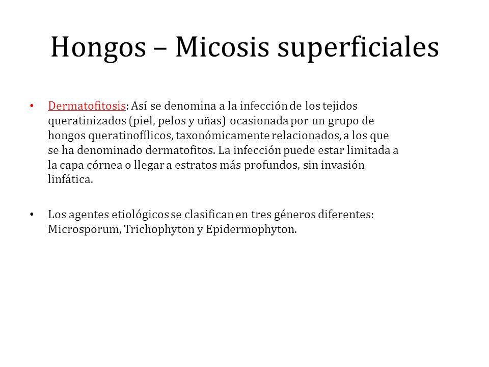 Hongos – Micosis superficiales