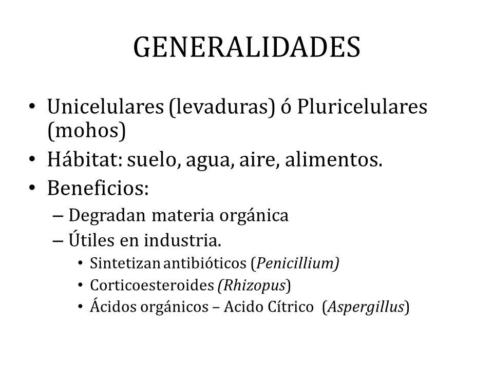 GENERALIDADES Unicelulares (levaduras) ó Pluricelulares (mohos)