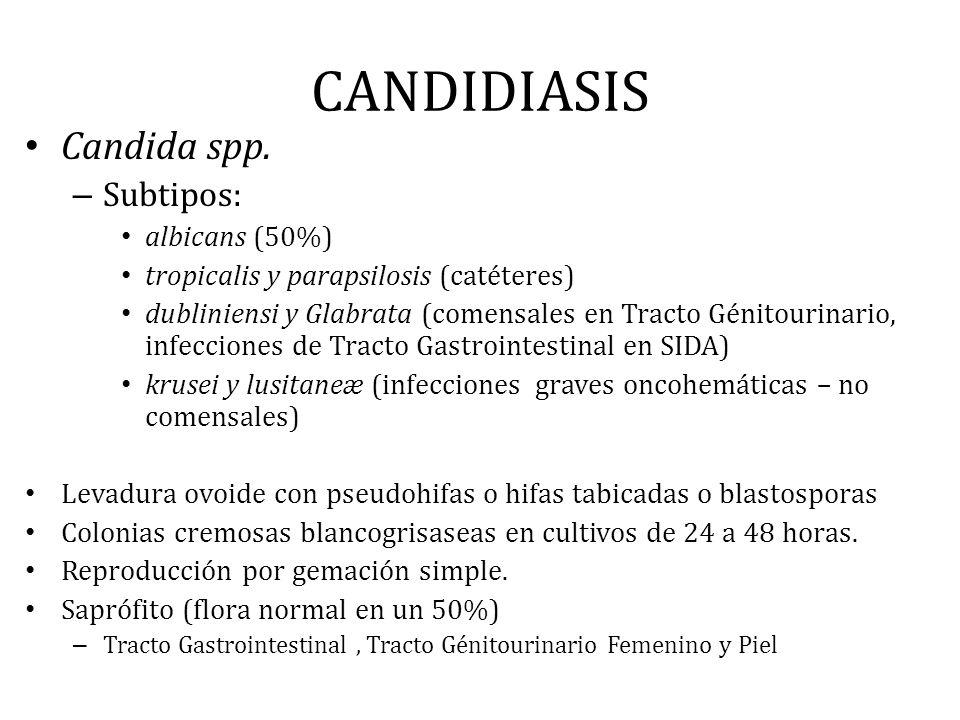 CANDIDIASIS Candida spp. Subtipos: albicans (50%)