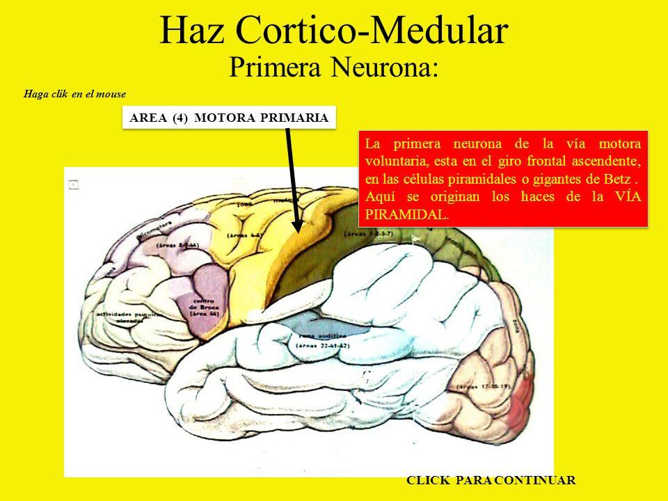 Haz Cortico-Medular Primera Neurona: