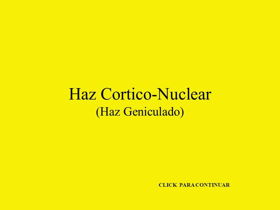 Haz Cortico-Nuclear (Haz Geniculado)