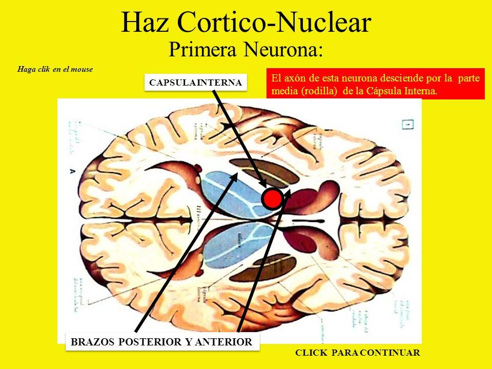 Haz Cortico-Nuclear Primera Neurona: