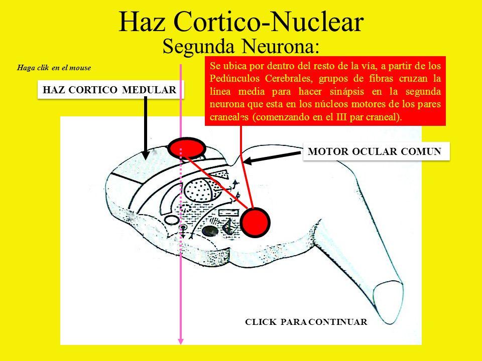 Haz Cortico-Nuclear Segunda Neurona: