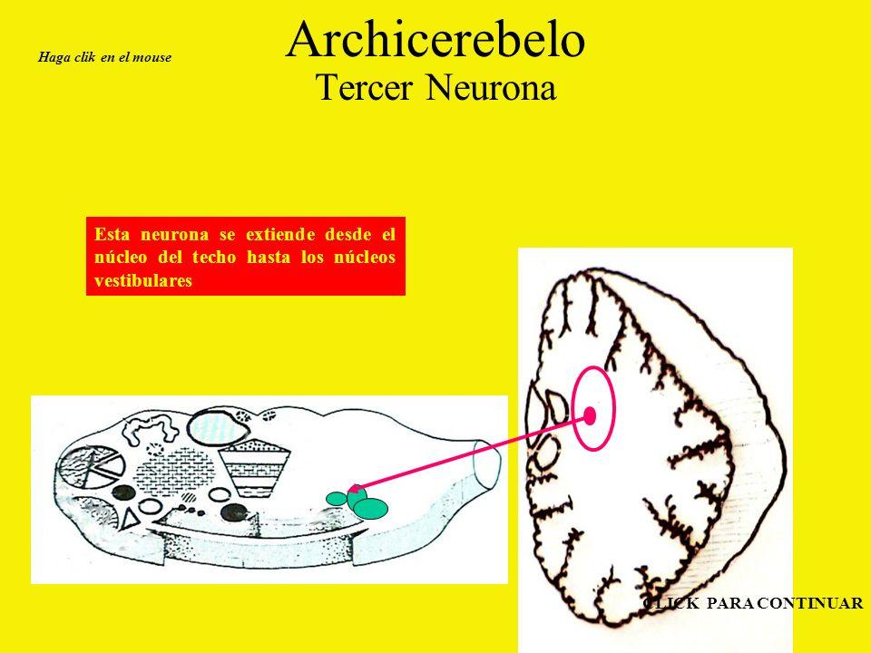 Archicerebelo Tercer Neurona