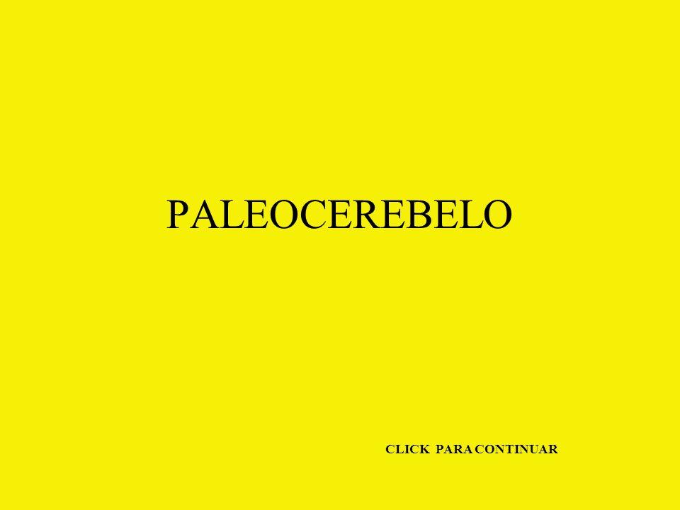PALEOCEREBELO CLICK PARA CONTINUAR