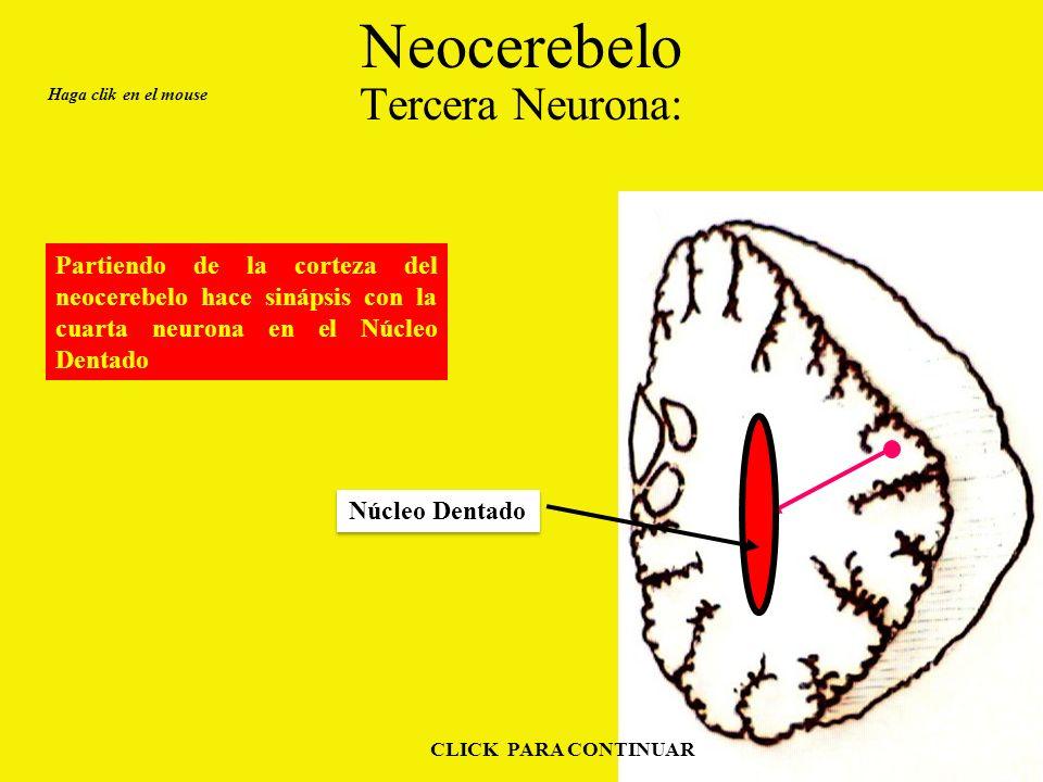 Neocerebelo Tercera Neurona: