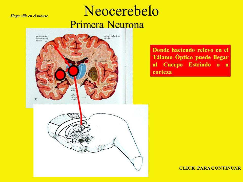 Neocerebelo Primera Neurona