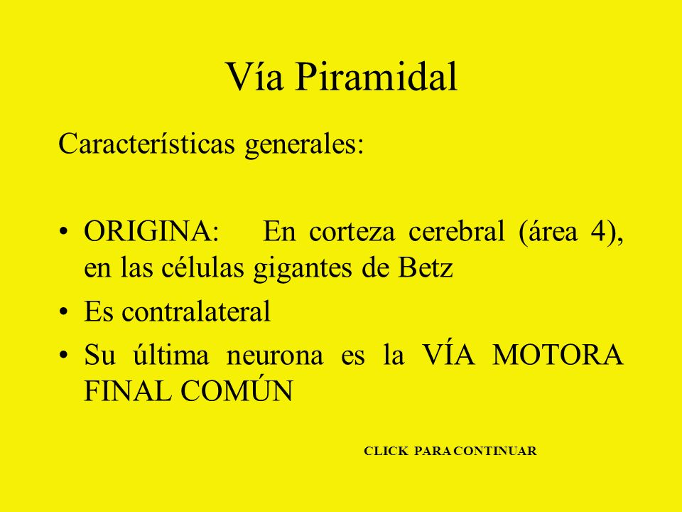 Vía Piramidal Características generales: