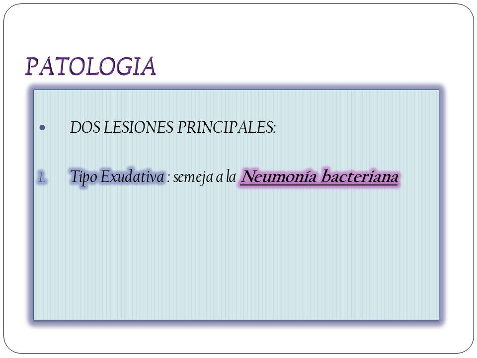 PATOLOGIA DOS LESIONES PRINCIPALES: