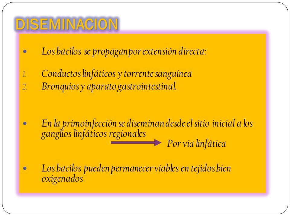 DISEMINACION Los bacilos se propagan por extensión directa: