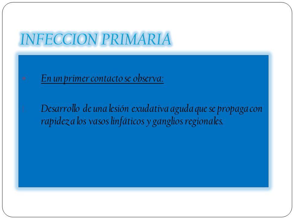 INFECCION PRIMARIA En un primer contacto se observa: