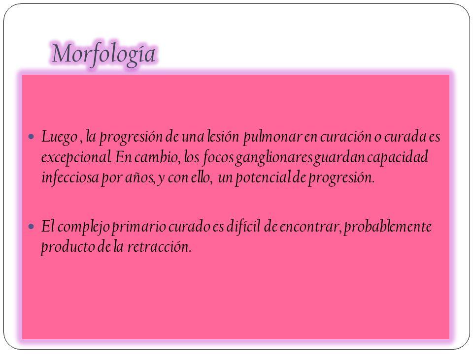 Morfología